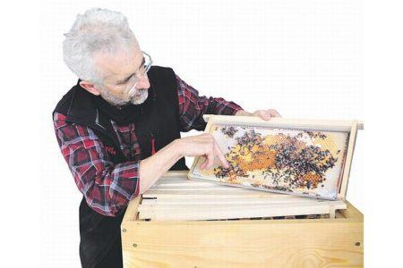 Der Bienen-Ingenieur  von Augsburg