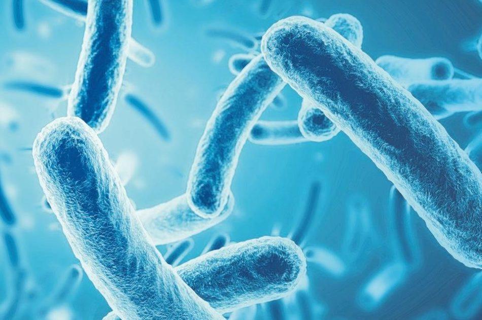 Nützliche Bakterien
