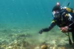 Meereswelt – ein Bild der Zerstörung
