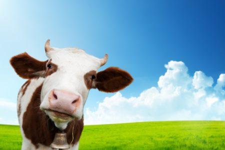 Wachstumsbranche Öko-Landwirtschaft
