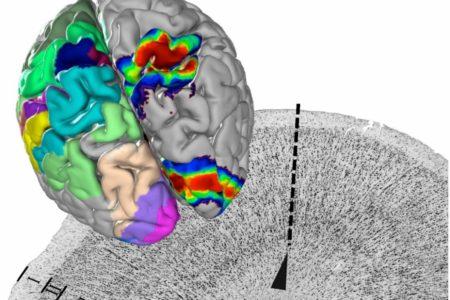Der erste 3-D-Atlas des menschlichen Gehirns