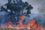 Australien will Feuer künftig mit Hightech bekämpfen