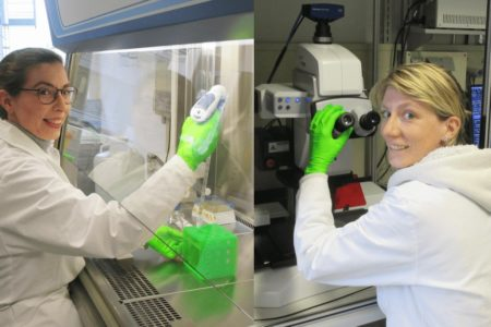 Biomaterial soll Zahnkronen beständiger machen
