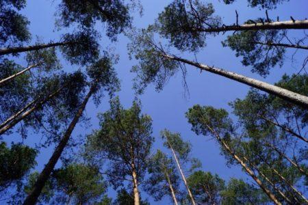 Forste fit machen für den Klimawandel