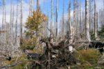 Klimaschutz durch Wald in Deutschland falsch eingeschätzt