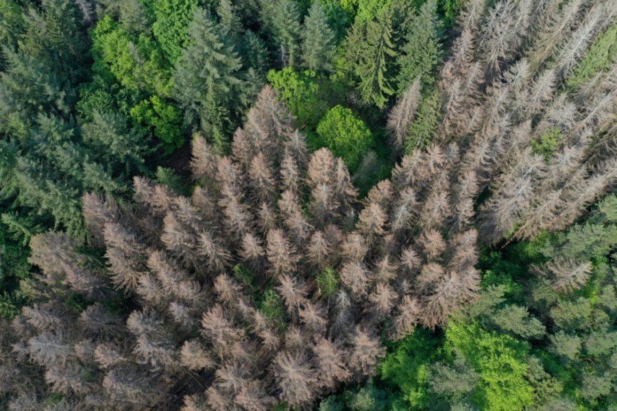 Waldmonitor: Geodaten zeigen starke Verluste in deutschen Wäldern