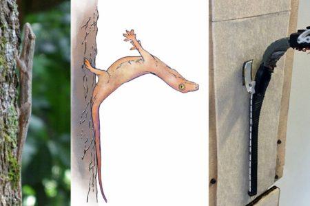 Bionik: Gleiten ohne Flügel nach dem Vorbild der Geckos