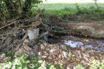 Unwetterkatastrophe: So haben Totholz und Sedimente die Eifel-Flut verstärkt