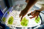 Bioökonomie: Die Zukunft der Wirtschaft
